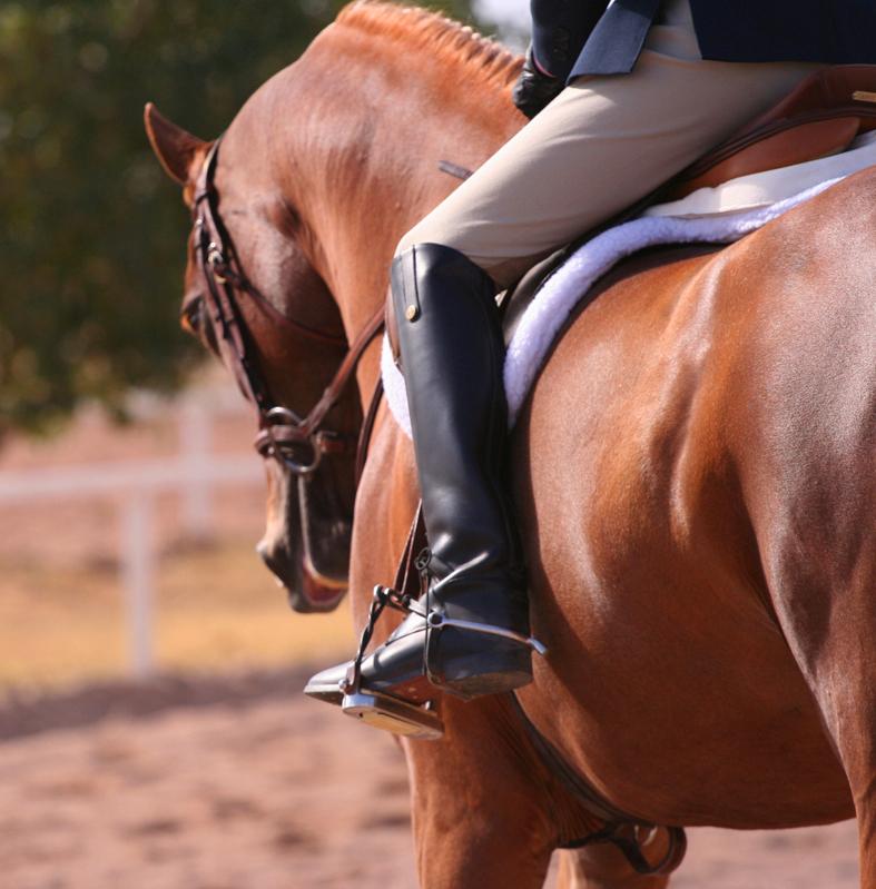 equitazione a cavallo